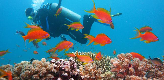 Dünyanın en güzel mercan resiflerine yolculuk…