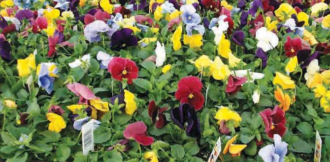 Bahçenizi, balkonunuzu rengarenk çiçeklerle donatın…