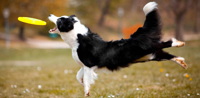 Avrupa'nın en önemli köpekli frizbi yarışması Disc Dog Challenge Türkiye'de…