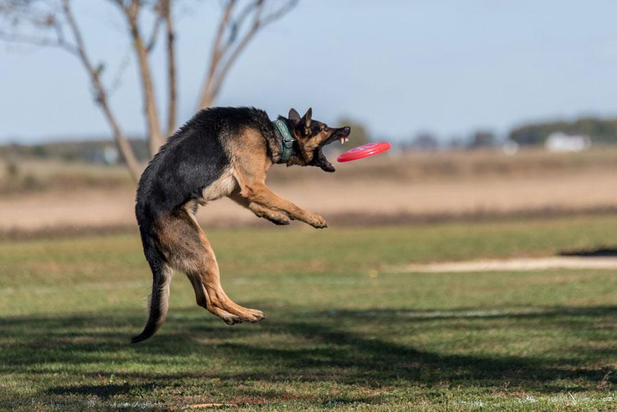 Disc_Dog_Challenge_Turkiye_2