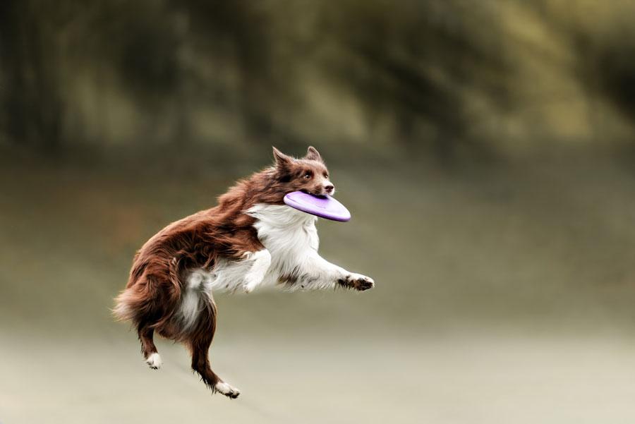 Disc_Dog_Challenge_Turkiye_4