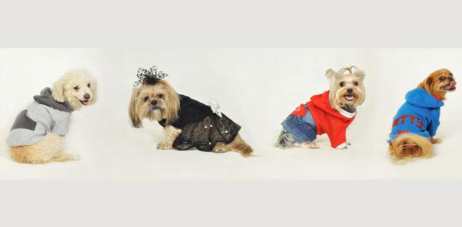 Fashion Pet ile patili dostlarımızın kış modası…