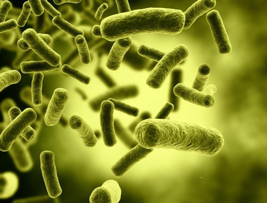 mikrobiyota_2