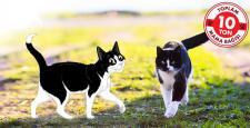 Hayvanlara destek için Felix'in #Sendepatile kampanyası başlıyor!