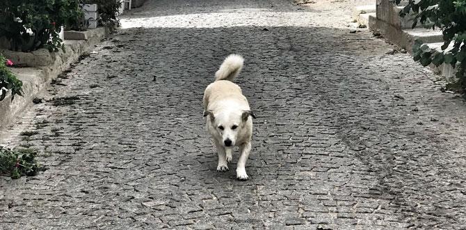 Bozcaada'nın güzeli Pakize ile sokak hayvanları için koşuyoruz…